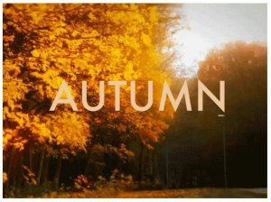 Autumn Header